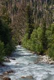 Mountain river with a rapid flow in the Caucasus Range royalty free stock photo