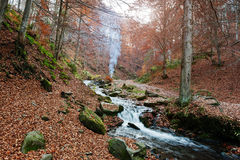 Mountain river rapids at autumn majestic forest with fallen leav Royalty Free Stock Image