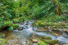Mountain river rapids Caucasus Royalty Free Stock Image