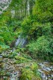 Mountain river rapids Caucasus Stock Images