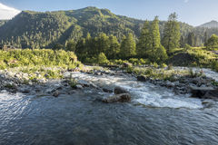 Mountain river with rapids. Stock Images