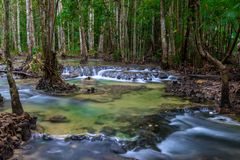 mountain river with rapids in the shady thick forest of Asia Royalty Free Stock Photos