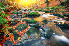 Mountain river with rapids and waterfalls at autumn time. Autumnal forest, rocks covered with moss, fallen leaves. Mountain river with rapids and waterfalls at Royalty Free Stock Images