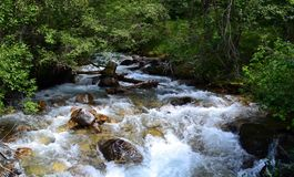 Mountain river. Mountain river, reserve Teberda, Karachay-Cherkessia Republic, Russia. Clean air and natural freshness in the protected forest, near a mountain Stock Image