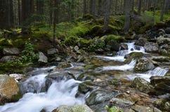Mountain river, Retezat, Carpathians Romania Royalty Free Stock Photography