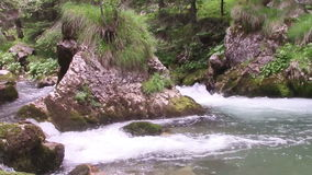 Mountain river rock. Pointy rock in the middle of a fast flowing mountain river, forming swirls and foamy waves around it stock footage
