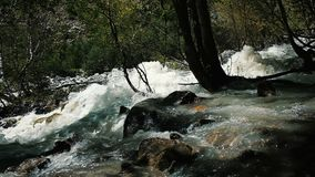 Mountain river runs along the forest, slow motion stock video