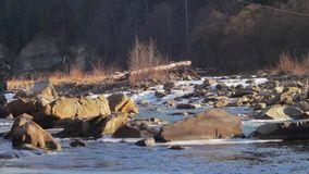 Mountain river runs rapidly. Beautiful creek flowing fast and rages between the rocks and ice stock video