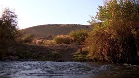 Mountain river, shepherd herding a herd of sheep in the mountains stock video footage