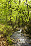 Mountain river. Small mountain river deep in the forest in spring time royalty free stock photography