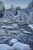 Mountain river and snow covered trees Royalty Free Stock Photos