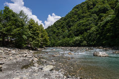 Mountain river. Sochi Stock Images