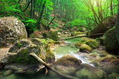 Mountain river in spring.  Stock Images