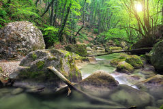 Mountain river in spring. Stock Photos