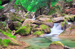 Mountain river in spring. Royalty Free Stock Photos