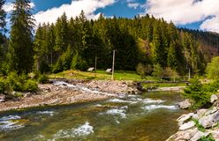 Mountain river in springtime. Beautiful scenery with spruce forest on a rocky shore. camping place and wooden bridge in the distance Royalty Free Stock Photography
