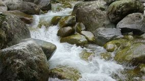 Mountain river stones. Fast mountain stream among the stones  spring a thaw in the forest stock footage