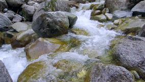 Mountain river stones. Fast mountain stream among the stones  spring a thaw in the forest stock video footage