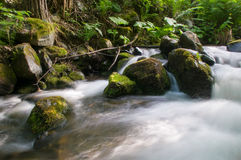 Mountain river with stones Royalty Free Stock Photo