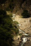 Mountain river. Stones. Green plants. Toned. Dramatic Stock Image