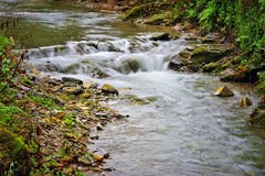 Mountain river with stones and greenery Stock Images