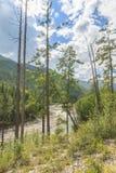 Mountain river. Stock Photos