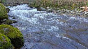Mountain river, water flowing over rocks and boulders. Mountain river, stream, creek with rapids flowing through woods in late autumn, early winter with snow stock video footage