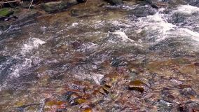Mountain river, water flowing over rocks and boulders. Mountain river, stream, creek with rapids flowing through woods in late autumn, early winter with snow stock video
