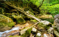 Mountain river stream. Stock Image