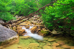 Mountain river. A stream of water in forest Royalty Free Stock Images