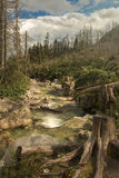 Mountain river with stump. Mountain clean river flowing over rocks. In the foreground, a tree stump Stock Photo