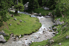 Mountain river in the summer forest. Mountain river in the green forest Royalty Free Stock Image