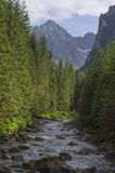 Mountain river. River and summits in Tatra Slovakia stock images