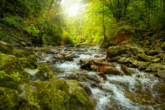 The mountain river in the sun Stock Photography