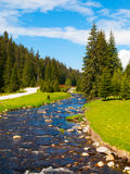 Mountain river on sunny day Stock Image