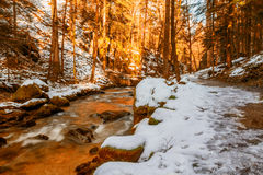 The mountain river at sunset in canyon Royalty Free Stock Image