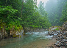 Mountain river surrounded with forest Stock Photo