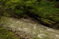 Mountain river surrounded by green vegetation Stock Photo