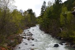 Mountain river surrounded by trees in the Elbrus region royalty free stock images