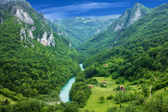 Mountain river Tara and forest in Montenegro Royalty Free Stock Photo