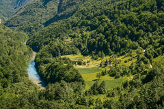Mountain river Tara. And forest in Montenegro. View from Durdevica arc bridge Stock Images