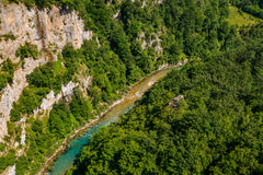 Mountain river Tara. And forest in Montenegro. View from Durdevica arc bridge Royalty Free Stock Photos