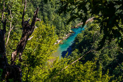 Mountain river Tara. And forest in Montenegro. View from Durdevica arc bridge Stock Photography