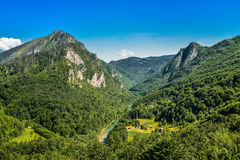 Mountain river Tara and forest. In Montenegro. View from Durdevica arc bridge Royalty Free Stock Photo