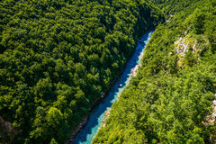 Mountain river Tara. And forest in Montenegro. View from Durdevica arc bridge Royalty Free Stock Images