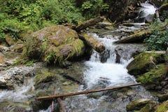 Mountain River, Teletskoye lake stock image