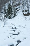Mountain river among the trees and snow Royalty Free Stock Photos