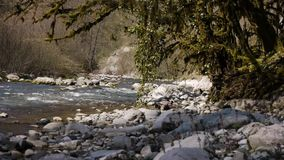 Mountain River among Trees. And Stones in Gorge stock video