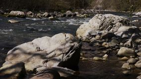 Mountain River among Trees. And Stones in Gorge stock footage