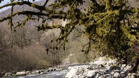 Mountain River among Trees. And Stones in Gorge stock video footage